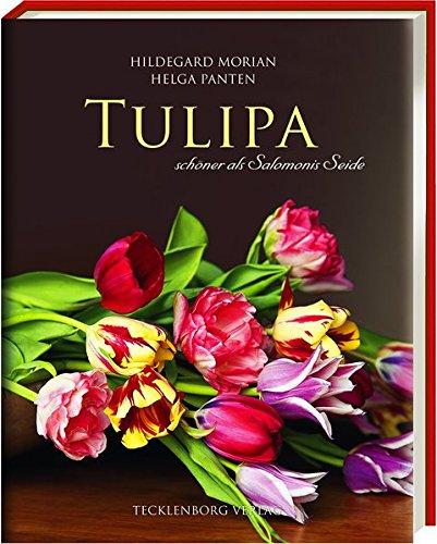 tulipa-schner-als-salomonis-seide