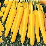AIMADO Samen-20 Stück Möhren Samen Bio reich an Vitaminen,Saatgut gemüse winterhart für den Frischverzehr als Salat, Gemüse und Saft, sowie zum Einfrieren geeignet.