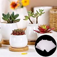 5Stück Vierkant-Containertöpfe Pflanztöpfe Kakteen-Töpfe Blumentopf Kunststoff