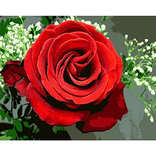 QERTYP DIY Malen nach Zahlen Rose Blume DIY Malen nach Zahlen Acryl Malen nach Zahlen Kalligraphie einzigartiges Geschenk für Wohnkultur Kunst, mit Rahmen