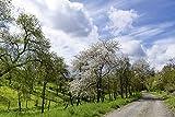 Artland Qualitätsbilder I Wandtattoo Wandsticker Wandaufkleber 120 x 80 cm Landschaften Wiesen Bäume Foto Blau C7NB Blühende Kirschbäume im Frühling