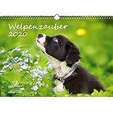 Welpenzauber DIN A3 Kalender 2020 Hunde Welpen - Seelenzauber