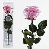 Decoflorales® - Eine echte, konservierte Rose. Unvergängliche Rose. Haltbare Rose. Ewig blühende Rose. Farbe rosa, Stiellänge ca. 25 cm