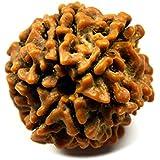CaratYogi Natural Lab Certified Rudraksha Bead 6 Mukhi 6 Face Original Nepali Rudraksh at Wholesale Rate
