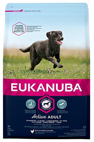 Eukanuba Adult Large Breed Trockenfutter (für erwachsene Hunde grosser Rassen, Premiumfutter mit Huhn), 3 kg Beutel