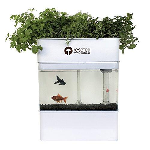 systeme-de-aquaponie-resetea-pour-lelevage-de-poissons-et-le-culture-de-plantes