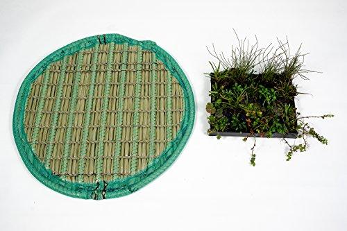 KOIPON Pflanzinsel inkl. 16 winterharten Teich-Pflanzen, rund, 80 cm – schwimmende Teichinsel mit Teichbepflanzung – Algen reduzieren in Koi-Teich durch Schwimmpflanzen auf Pflanzeninsel