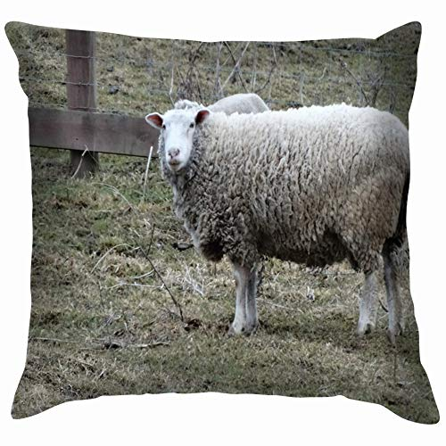 beautiful& One Sheep Meadow Near Fence Animals Wildlife Agriculture Parks Outdoor Soft Cotton Linen Cushion Cover Pillowcases Throw Pillow Decor Pillow Case Home Decor 18X18 Inch