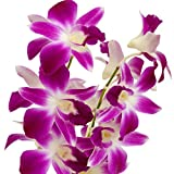 #3: Orchid live plant Pink(with Growing guide)