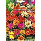 Vivai Le Georgiche Portulaca Grandiflora Semplice In Miscuglio (Semente)