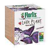 Flortis Plantcube - Flortis Plantcube - Un pot en bois en forme de cube pour les semis, une belle idée cadeau - Plante d'amour (Love Plant)