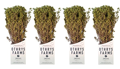 Premium Greek Oregano Bunch, Traditional Aromatic Herb, 200g. Intense Rich Flavour with Health Benefits.