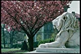 470004 Spring Blossoms At Stone Lions At Lausanne