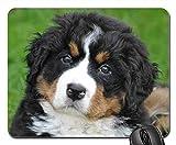 Gaming-Mauspads, Mäusematte, Berner Sennenhund Hund Big Dog Animal Green 1