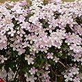 Kletterpflanzen Trio - 3 Pflanzen im Set von Native Plants auf Du und dein Garten