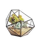 géométrique triangulaire Demi Boule en verre géométrique Terrarium pour Succulente Cactus Fern Moss miniature bonsaï