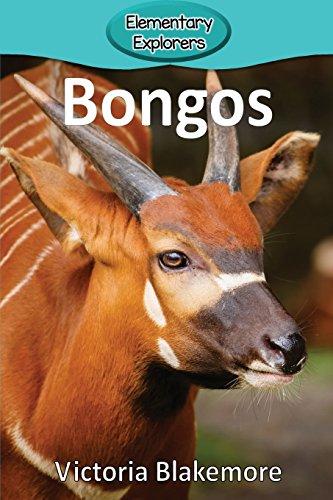 Bongos (Elementary Explorers)