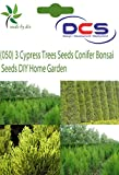 DCS(050) 3 Cypress Trees Seeds Conifer B...