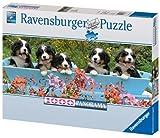 Ravensburger 15116 - Berner Sennenhunde - 1000 Teile Panorama Puzzle