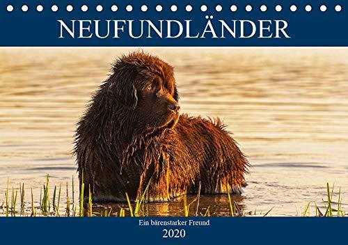 Neufundländer - Ein bärenstarker Freund (Tischkalender 2020 DIN A5 quer): Der braune Neufundländer in 13 hinreißenden Bildern vorgestellt (Monatskalender, 14 Seiten ) (CALVENDO Tiere)