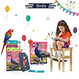 Best Toys 4 Year Old Girl - Birds | Age 3-10 Years | Educational Learning Review