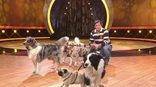 Martin Rütter - Die große Hundeshow