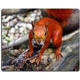 MSD caucho Natural alfombrilla para ratón imagen ID: 10392972ardilla roja