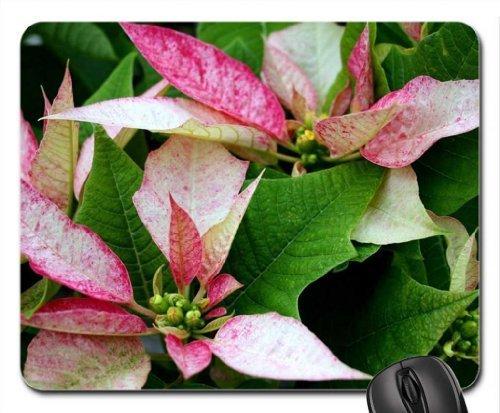 Weihnachtsstern Mauspad, Mousepad (Blumen Mauspad) (Weihnachtsstern Pearl)
