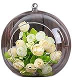 Vi.yo Jarrón de cristal para plantas de terrarios abiertos con bola de cristal transparente y decoración de plantas de estilo moderno, Transparente, 8 cm