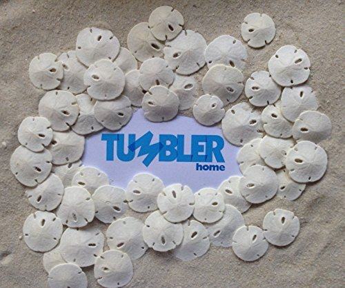 tumbler-home-certified-small-natural-white-sand-dollars-50-pcs-wedding-sea-shell-craft-1-2-to-1-hand