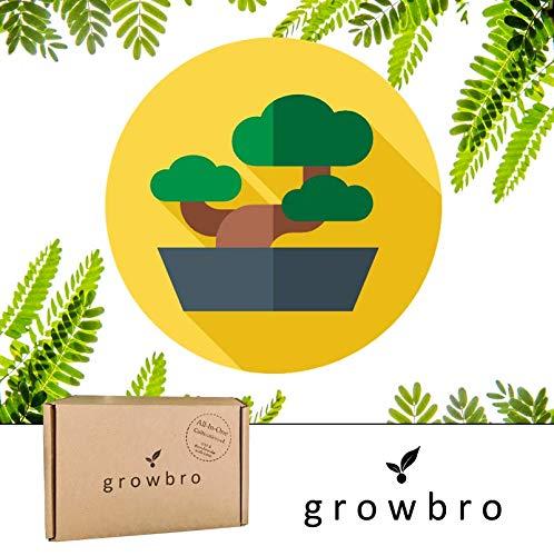 Bonsai Starter Kit | growbro | Mimose Anzuchtset | Dein erster Bonsai | Anfänger Geschenk Set, kleines Dankeschön Geschenk für Frauen & Männer, Bonsai Baum Mitbringsel, Mimose Pflanze