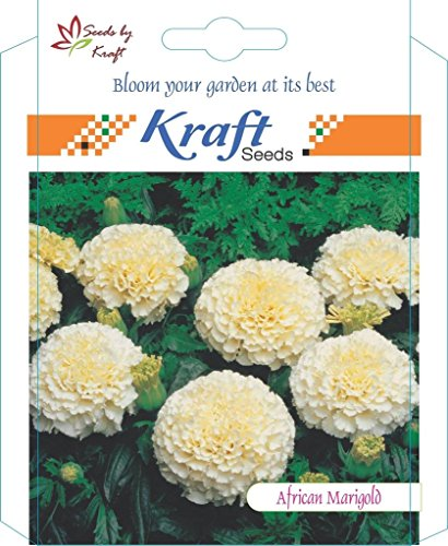 Kraft Seeds African Marigold F1 Hybrid White Vanilla Flower Seeds