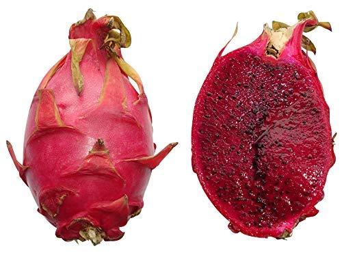 Hylocereus monacanthus --Pitahaya rojo 20 Semillas