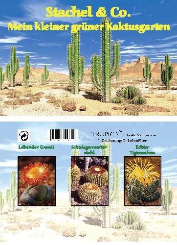 Mini-Gewächshaus - Kaktusgarten - Samen vom Lebenden Granit, Schwiegermutterstuhl und Tigerrachen