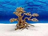 Bonsai Baum XL Wurzel Holz Aquarium Deko Aquascaping Wurzel original Foto Nr.664