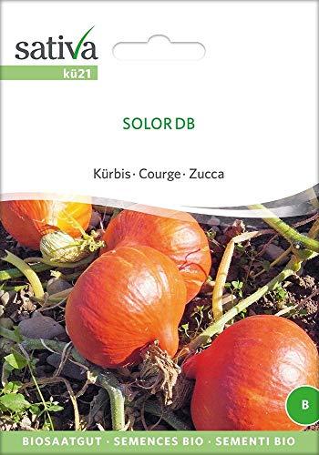 Kürbis Solor Db | Bio-Kürbissamen
