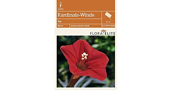 Kardinals-Winde Rot von Flora Elite: Amazon.de: Garten