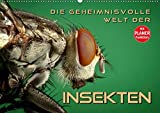 Die geheimnisvolle Welt der Insekten (Wandkalender 2020 DIN A2 quer): Faszinierende Nahaufnahmen von verschiedenen Insekten (Geburtstagskalender, 14 Seiten ) (CALVENDO Tiere) -
