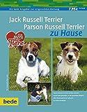 Jack Russell Terrier und Parson Russell Terrier zu Hause