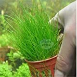 Frühling Bonsai Aquarium Grassamen 100pcs 10kinds Mischung Grassamen Novel blühende Pflanze für Hof Garten
