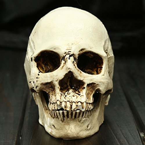 free-shipping-halloween-small-human-skull-replica-scary-horrible-halloween-decoration-bmlr-brand-hal