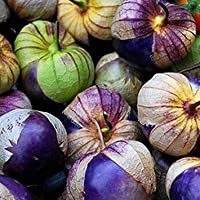Nuevos púrpura Tomatillo -Physalis ixocarpa- Salsa Mexicana 10 Semillas por Samenchilishop