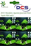 DCS(037) 5 Mosi plants Aquarium Grass Se...