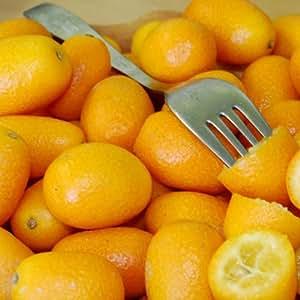 Plant World Seeds - Kumquat Seeds