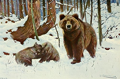 Friedrich Wilhelm Kuhnert - Wild Life of The World 1916 Brown Bears Kunstdruck (45,72 x 60,96 cm)