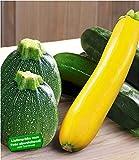 BALDUR-Garten Veredelte Zucchini-Kollektion,3 Pflanzen Cucurbita Gemüsepflanzen