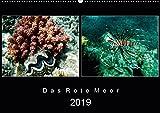 Das Rote Meer - 2019 (Wandkalender 2019 DIN A2 quer): Bunte Artenvielfalt und Unterwasserlandschaften an den Riffen im Roten Meer. (Monatskalender, 14 Seiten ) (CALVENDO Tiere) -