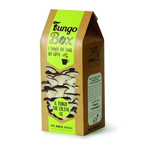 fungobox-el-kit-para-cultivar-de-casa-seta-azul-comestibles-y-buenos-los-fondos-del-cafe-un-regalo-p