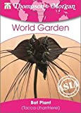 Thompson & Morgan World Garten Blumen Fledermaus Pflanze (Fledermausblume) 4 Samen