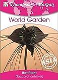 Thompson & Morgan World Garten Blumen Fledermaus Pflanze (Fledermausblume) 4 Samen